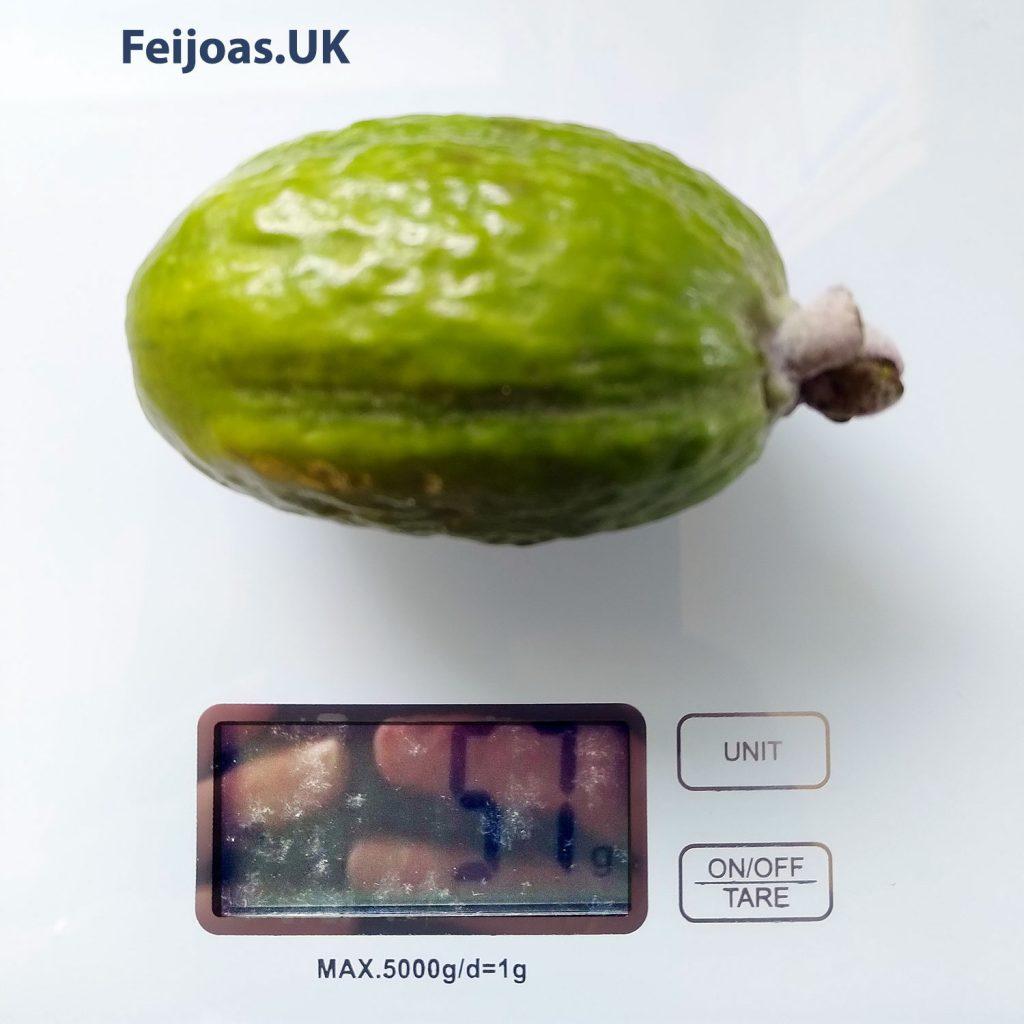 Feijoa fruit 57 grams