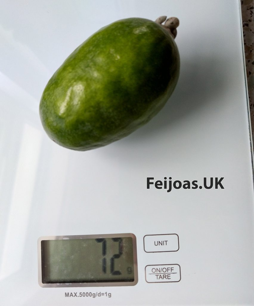 Photo of a Feijoa Gemini that weighs in at 72 grams.